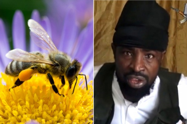 Boko Haram demons take out by bees